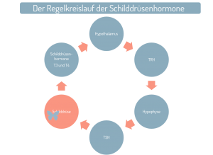 Regelkreislauf der Schilddrüsenhormone